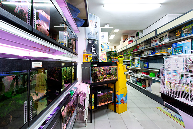botiga
